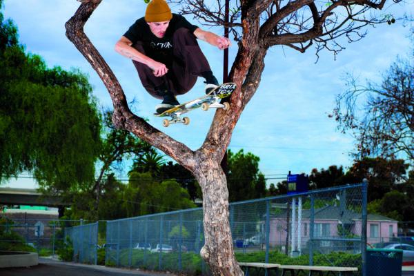 Dolan_Stearns_TreeOllie_R3 copy